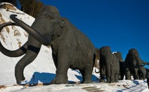Nghiên cứu tái sinh voi mamut
