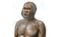 """Tìm thấy hóa thạch """"loài người"""" mới"""