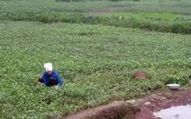 Chuyển đất nông nghiệp sang đất ở: Vướng đủ kiểu