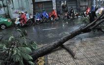 Bão số 1 quật ngã cây cối khắp Sài Gòn
