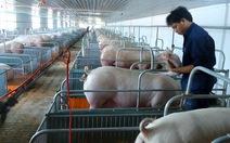 Thí điểm mô hình chăn nuôi heo sạch