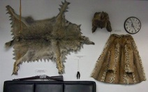 Binh lính Mỹ tiếp tay buôn bán động vật hoang dã?