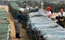 Thuốc, thịt nhiễm chất cấm ở Trung Quốc