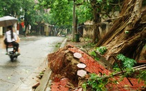 Lào Cai: lốc xoáy, hàng trăm cây xanh bật gốc