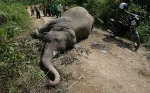 Voi Sumatra quý hiếm bị giết ở Indonesia