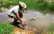 Đà Nẵng: cá chết hàng loạt cạnh KCN Hòa Cầm