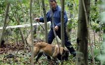 Pháp bắt hai người TQ giết người chặt xác