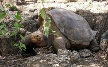 Rùa khổng lồ trăm tuổi cuối cùng qua đời