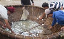 Ô nhiễm bủa vây biển Quảng Ngãi