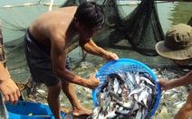 Khẩn cấp cứu người nuôi cá tra