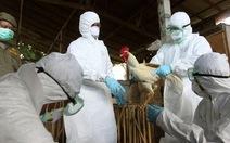 Xuất hiện dịch H5N1 ở Tân Cương