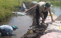 Long An: nước sông dâng cao, hàng ngàn hecta lúa bị ngập
