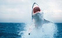 Cá mập tấn công người ở Úc