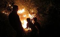 Đà Nẵng: hơn 400 người cứu rừng trong đêm