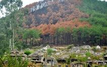 Cháy rừng vì đốt vàng mã