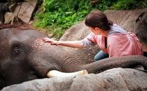 Một ngày ở trại voi Patara