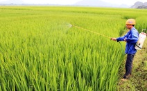 Lúa giống phụ thuộc Trung Quốc