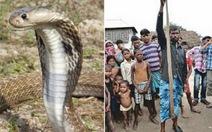 Nepal: người cắn chết...rắn hổ mang