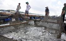Trúng nước độc, cá bè chết hàng loạt