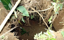 Sau mưa, hố sâu 10m xuất hiện trong vườn