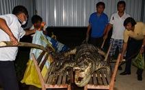 Tìm lại dấu tích cá sấu Xiêm