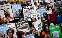 Biểu tình chống xuất khẩu động vật sống