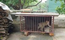 Giao nộp khỉ đuôi lợn quý hiếm thả về rừng
