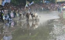 Sôi động lễ hội đua bò Bảy Núi
