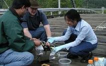 Kỹ sư môi trường lương bao nhiêu?