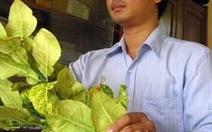 Bệnh xá cho cây trồng