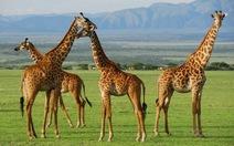 Tanzania mời nhà báo nước ngoài quảng bá du lịch