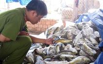 Tiêu hủy 1,5 tấn cá nóc