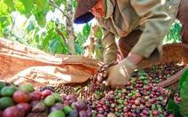 """Xuất khẩu cà phê và """"số 1 thế giới"""""""