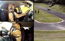 Chó lái xe trên đường đua