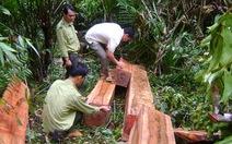 Bắt vụ phá rừng tịch thu hơn 20m3 gỗ