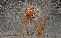 Ảnh đoạt giải National Geographic 2012