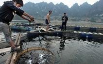 Nghề mới trên hồ thủy điện Sơn La