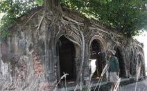 Ngôi đình cổ trong lòng cây bồ đề