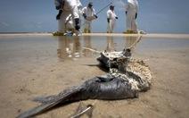 Bóng ma tràn dầu tiếp tục đeo bám BP