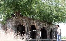 3 tỉ đồng trùng tu ngôi đình cổ trong lòng cây bồ đề