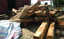 Bán đấu giá gỗ chạy... tết