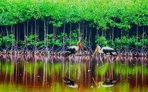 Ứng xử trách nhiệm với khu Ramsar