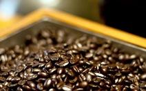 """Starbucks tung chiêu """"moi tiền"""" đối thủ: giảm 1 USD/túi cà phê"""