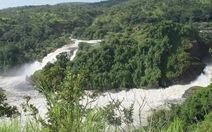 Rong chơi dưới tán rừng Murchison