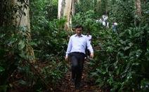 Cơ chế không bảo vệ được rừng