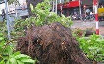 Giông lớn, cây xanh trung tâm Sài Gòn bật gốc