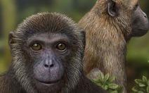 """Thêm hai loài """"vượn và khỉ"""" mới vào cây tiến hóa"""