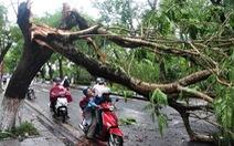 Huế: gió lốc, mưa đá làm hàng loạt cây cối đổ gãy