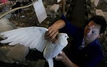 H7N9 có nguy cơ lây ở người cao