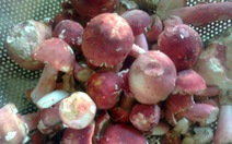Nấm chẹo - đặc sản núi rừng Đông Bắc